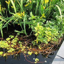 Hoe leg je een plantenfilter aan: afbeelding 16
