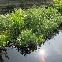 Hoe leg je een plantenfilter aan: afbeelding 19