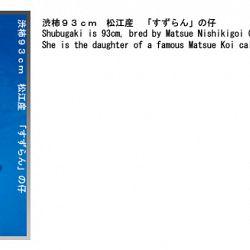 informatie oyakoi Hakubotan: afbeelding 1