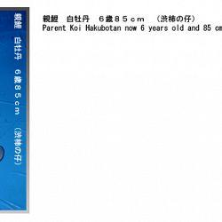 informatie oyakoi Hakubotan: afbeelding 3