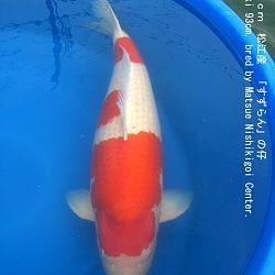informatie oyakoi Hakubotan: afbeelding 5