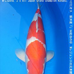 informatie oyakoi Hakubotan: afbeelding 6