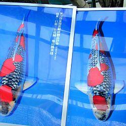 Japan-dag 2: afbeelding 16