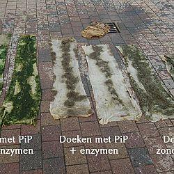 Koi Enzymen contra Pip: afbeelding 1