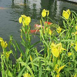 Lilliputterke en Schanulleke: afbeelding 2