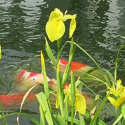 Lilliputterke en Schanulleke: afbeelding 3