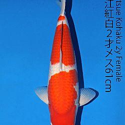 Matsue en Sakai Kai@Narita: afbeelding 5