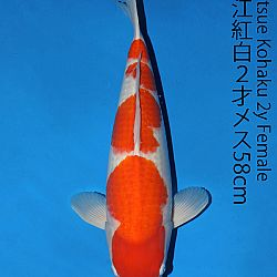 Matsue en Sakai Kai@Narita: afbeelding 10