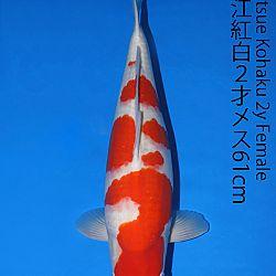 Matsue en Sakai Kai@Narita: afbeelding 35