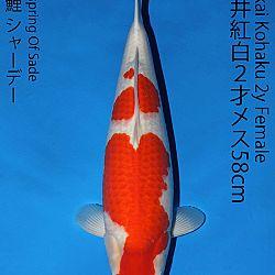 Matsue en Sakai Kai@Narita: afbeelding 42
