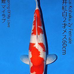 Matsue en Sakai Kai@Narita: afbeelding 43