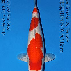 Matsue en Sakai Kai@Narita: afbeelding 45