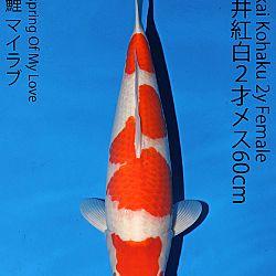 Matsue en Sakai Kai@Narita: afbeelding 46
