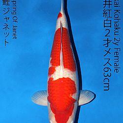 Matsue en Sakai Kai@Narita: afbeelding 47