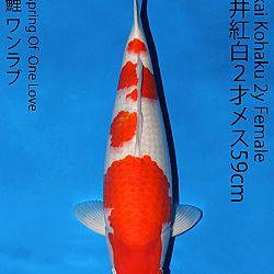 Matsue en Sakai Kai@Narita: afbeelding 49