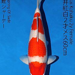 Matsue en Sakai Kai@Narita: afbeelding 50