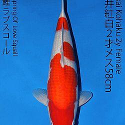 Matsue en Sakai Kai@Narita: afbeelding 51