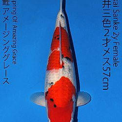 Matsue en Sakai Kai@Narita: afbeelding 56