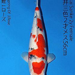 Matsue en Sakai Kai@Narita: afbeelding 59