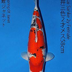 Matsue en Sakai Kai@Narita: afbeelding 60