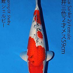 Matsue en Sakai Kai@Narita: afbeelding 61