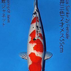 Matsue en Sakai Kai@Narita: afbeelding 62