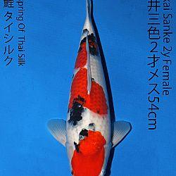 Matsue en Sakai Kai@Narita: afbeelding 63