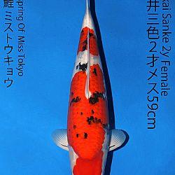 Matsue en Sakai Kai@Narita: afbeelding 64