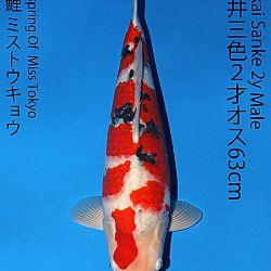 Matsue en Sakai Kai@Narita: afbeelding 66