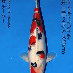 Matsue en Sakai Kai@Narita: afbeelding 68