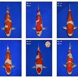 Momotaro auction 17 februari: afbeelding 3
