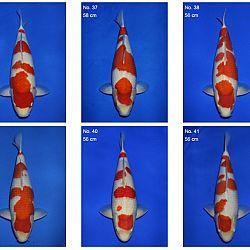 Momotaro auction 17 februari: afbeelding 9
