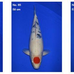 Momotaro auction 17 februari - Sanke: afbeelding 4