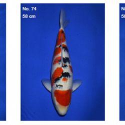 Momotaro auction 17 februari - Sanke: afbeelding 5