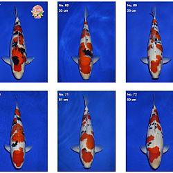 Momotaro auction 17 februari - Sanke: afbeelding 6