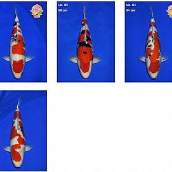 Momotaro auction 17 februari - Sanke: afbeelding 9