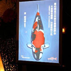Momotaro Party ter ere van GC 2014: afbeelding 5