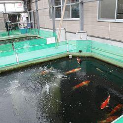 Narita: afbeelding 2
