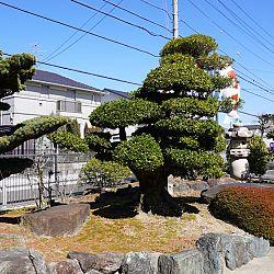 Narita Niigata Showa project: afbeelding 4