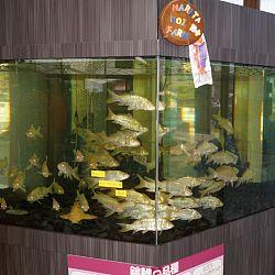 Narita Opensales: afbeelding 10