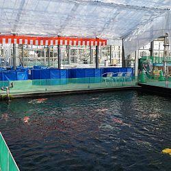 Narita Opensales: afbeelding 41