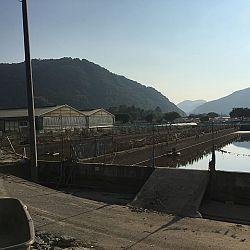 Nieuwsitem-live-Japan: afbeelding 18