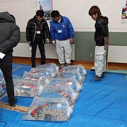 Niigata Veiling 14 maart: afbeelding 1