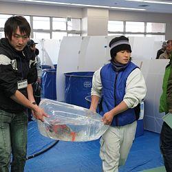 Niigata Veiling 14 maart: afbeelding 7