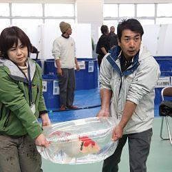 Niigata Veiling 14 maart: afbeelding 9