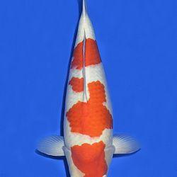 Onze keuze van de veilingvissen: afbeelding 1