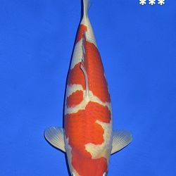 Onze keuze van de veilingvissen: afbeelding 2