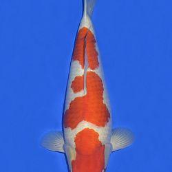 Onze keuze van de veilingvissen: afbeelding 3