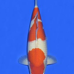 Onze keuze van de veilingvissen: afbeelding 4