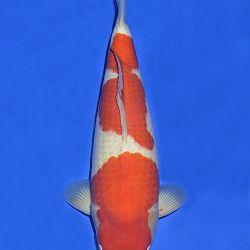 Onze keuze van de veilingvissen: afbeelding 5